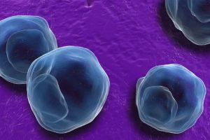 Chlamydia Trachomatis